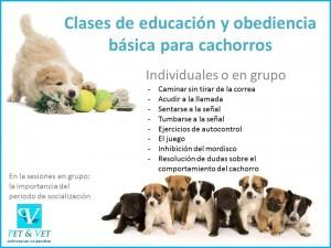 Clases de educación y obediencia básica para cachorros