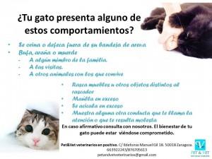 detección problemas de conducta gato