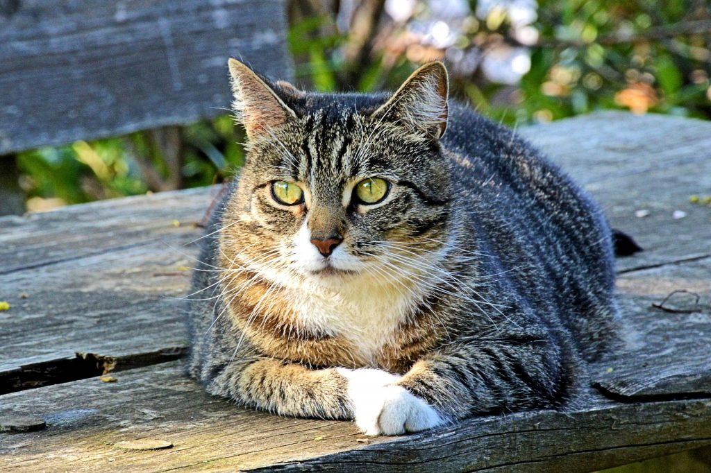 cat-1974758_1920