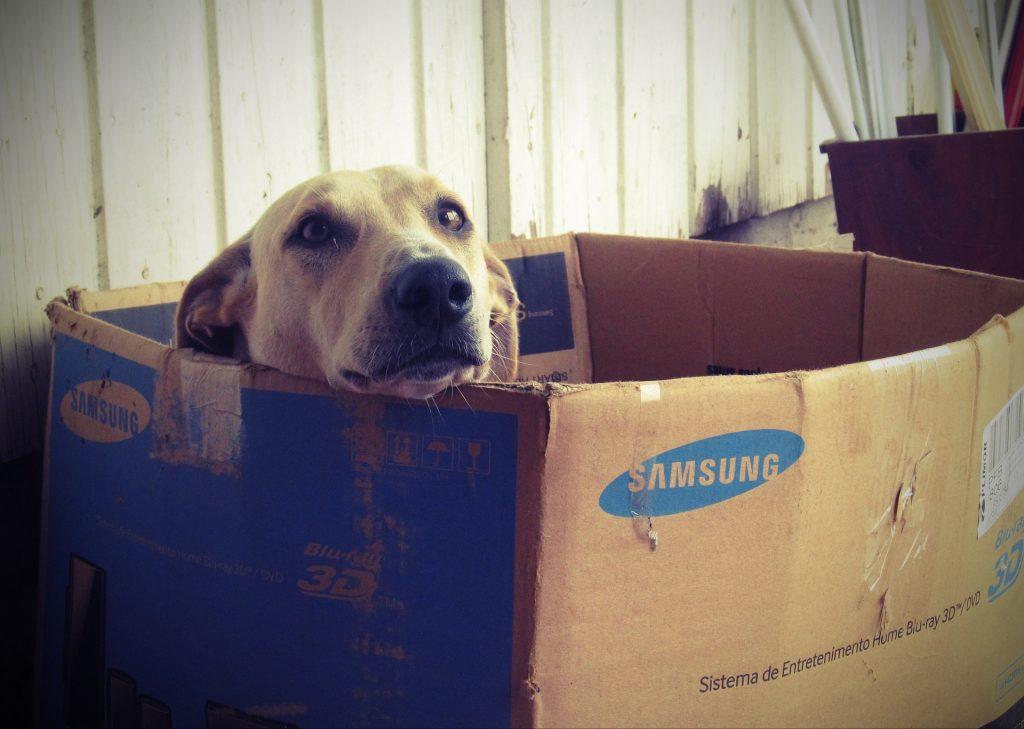 dog-660505_960_720